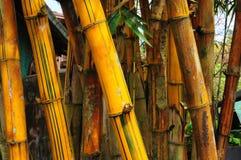 Particolare di bambù Fotografia Stock Libera da Diritti