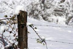 particolare di inverno Fotografia Stock