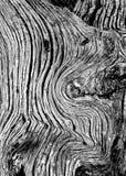 Particolare di legno Fotografia Stock Libera da Diritti