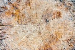 Particolare di legno di struttura per cenni storici. Immagini Stock