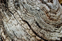Particolare di legno guasto Fotografia Stock Libera da Diritti