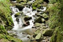 Particolare di un fiume selvaggio Fotografie Stock Libere da Diritti