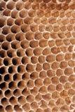 Particolare di un nido vuoto del calabrone Fotografia Stock