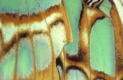 Particolare di una farfalla verde   immagini stock