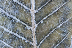 Particolare a macroistruzione del primo piano del foglio congelato Fotografia Stock