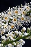 Particolare a macroistruzione di piccoli fiori Fotografia Stock