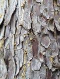 Particolare nell'albero Fotografia Stock Libera da Diritti