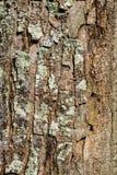 Particolare nell'albero Immagini Stock