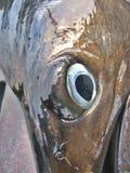 Particolare - occhio del pesce vela del Pacifico fotografia stock