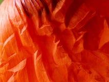 Particolare rosso #3 del foglio del papavero Fotografia Stock
