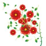 Particolare rosso del cespuglio di rosa Immagine Stock