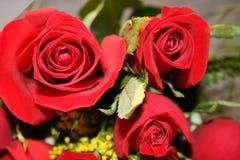 Particolare rosso delle rose fotografia stock libera da diritti
