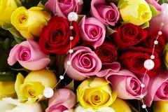 Particolare sulle rose Fotografie Stock