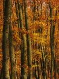 Particolari degli alberi in una foresta in autunno fotografie stock