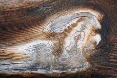 Particolari dei granuli in legno Fotografia Stock Libera da Diritti