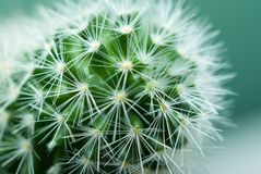 Particolari del cactus fotografia stock libera da diritti