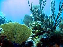 Particolari del corallo del mare Fotografie Stock