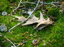 Particolari del pavimento della foresta Immagini Stock Libere da Diritti