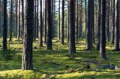 Particolari della foresta scenica Immagine Stock Libera da Diritti