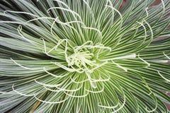 Particolari della pianta Fotografia Stock Libera da Diritti
