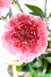 Particolari dentellare del fiore Immagine Stock Libera da Diritti