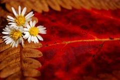 Particolari di autunno Immagine Stock