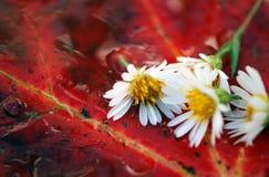 Particolari di autunno Fotografia Stock