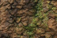Particolari strutturati della roccia Fotografie Stock