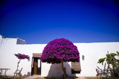 Particular architectural Masseria. Particular architectural typical of the Masseria in Puglia zone Salento Italia Royalty Free Stock Photos
