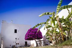 Particular architectural Masseria. Particular architectural typical of the Masseria in Puglia zone Salento Italia Royalty Free Stock Photography