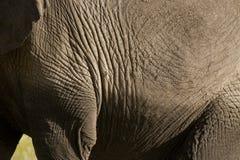 Elephant skin Royalty Free Stock Images