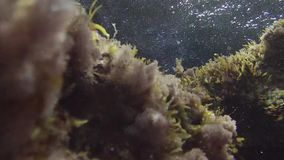 Particular vision of the Mediterranean seabed of the island of Ventotene. Vision of the seabed of the Mediterranean `island of Ventotene with water movement on stock video