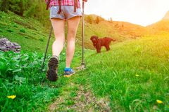 Walk in the mountains of girl with dog stock photography