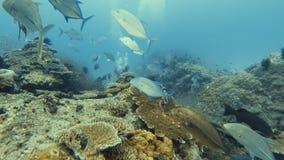 Partida subacuática almacen de metraje de vídeo