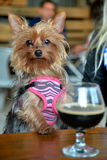 Partido del perrito Fotos de archivo libres de regalías