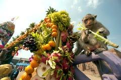 Partido do macaco de Tailândia (bufete do macaco de Tailândia) foto de stock royalty free