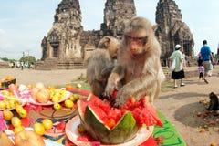 Partido do macaco de Tailândia (bufete do macaco de Tailândia) foto de stock