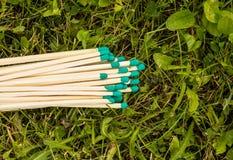 Partidos con las cabezas verdes en la hierba, primer imagenes de archivo