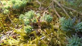 Partie 2 d'herbe images stock