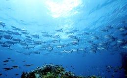 Partie d'océan de mère Images libres de droits