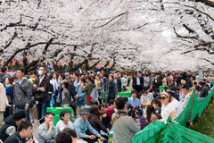 Partie de Hanami en parc d'Ueno, Tokyo Photos stock