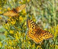 Partie de pollen en parc cherokee Photos stock