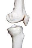 Partie latérale d'articulation de genou Image libre de droits