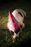 Partied Out Party Animal Royalty Free Stock Images