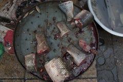 Parties de poissons frais Photographie stock