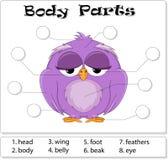 Parties du corps d'oiseau Image libre de droits