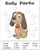 Parties du corps de chien Image stock