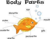Parties du corps de poissons Images stock