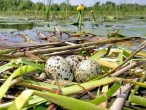 Partij eieren royalty-vrije stock afbeelding