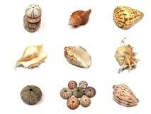 Partij overzeese shells op witte achtergrond Royalty-vrije Stock Afbeeldingen